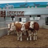 供应波尔山羊养殖前景波尔山羊价