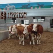 波尔山羊养殖前景波尔山羊价图片