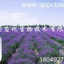 供应香紫苏油 植物精油 植物香料