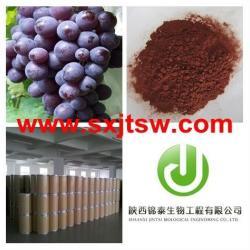 供應優質葡萄籽提取物原花青素