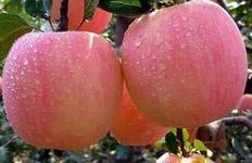 山东忠兴水果批发基地