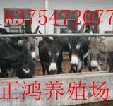 供应肉驴价格高唐驴德州驴肉驴养殖场