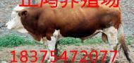 山东正鸿牛羊养殖场