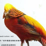 白鹤成鸟图片