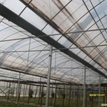 供应盆景园建设及其设计资材