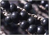 供应巴西进口阿萨伊果汁粉/提取物