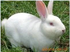 湖南养兔场