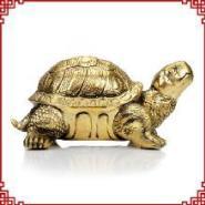 金寿龟图片