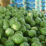 供应河南周口西瓜代售点 个大味美无籽西瓜天然产区图片
