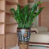 供应北京花卉租赁价格 北京花卉租赁价格、北京绿植花卉服