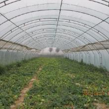 最好的大棚种苗 各种蔬菜种苗 寿光金翰13964620181