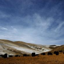 供应夏日塔拉——中国最美的草原之一