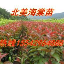 供应123果树苗