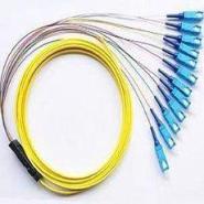 SC12芯束状光纤尾纤图片