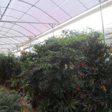 厦门植物租赁/厦门植物出租/厦门银行植物租赁 花地