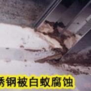 深圳专业灭白蚁公司图片