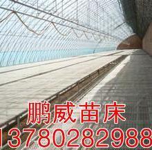 供应固定苗床钢板苗床温室资材