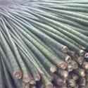 供10米以上大毛竹图片