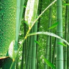 供应大量毛竹及竹制品