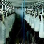 澳大利亚乳制品加工厂工人图片