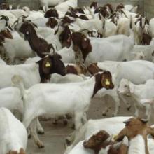 什么养殖业最赚钱,吉泰畜牧养殖基地18754011981