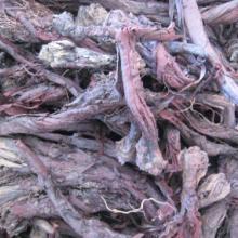 供应新疆软紫草