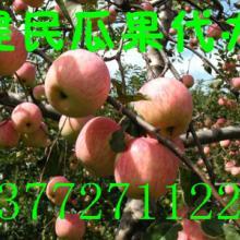 大荔县建民果行供应优质红嘎啦苹果