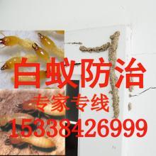 供应狮山白蚁防治所1专业除虫害1批发