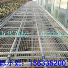 新型移动苗床移动式育苗床温室移动式苗床
