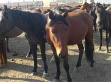 供应南京优质肉驴养殖,肉驴的饲养方法,肉驴的饲养成本批发