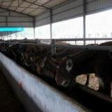 供应 江苏肉驴价格肉驴养殖技术驴舍建设视频