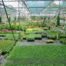 农业温室大棚专用pc耐力板、 抗紫外线pc耐力板 、抗冲击pc耐力板图片