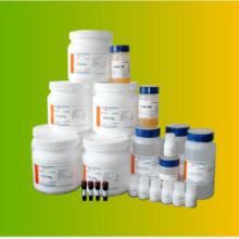 供应羊抗小鼠纯化抗体批发