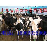 供应波尔山羊与牛羊的不同点批发