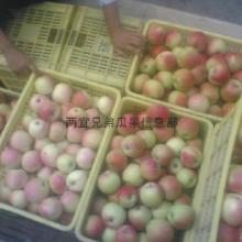 供应用于生鲜水果的大量供应嘎啦苹果基地嘎啦苹果产地图片