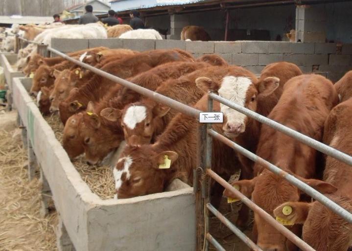 山东水木牧业牛羊养殖