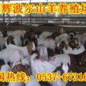 供应山西原平市羊养殖场明辉养殖波尔山羊效益分析哺乳饲养期管理