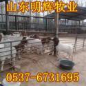 供应东台市波尔山羊养殖基地,江苏山羊养殖效益分析