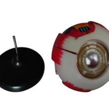 PVC眼球模型/6倍放大人体眼球眼睛模型/眼珠/内部可拆/教学模型批发
