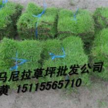 供应郴州绿化工程