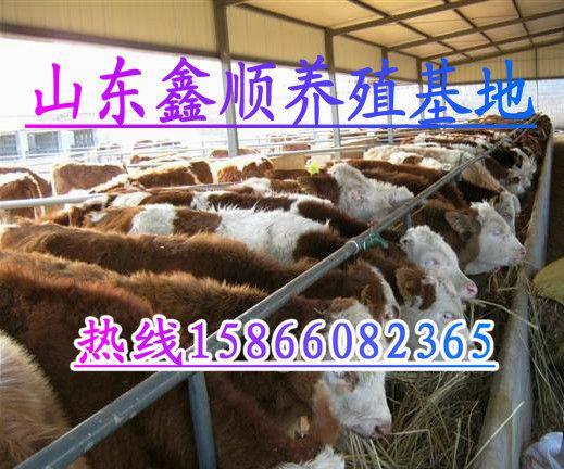 供应甘孜藏族泸定县养牛场、甘孜藏族养牛牧场、甘孜藏族养牛厂家