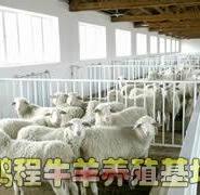 小尾寒羊价格波尔山羊效益分析图片
