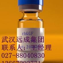 供应重组人角质细胞生长因子KGF