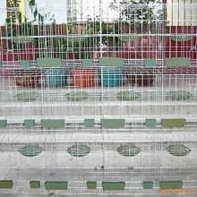 供应鸡鸽兔笼的厂家鸡鸽兔笼的价格鸡鸽兔笼的用途