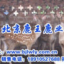供应鹿是不吃动物性饲料的