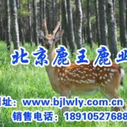 山西省运城市梅花鹿养殖图片