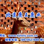 鹿酒系列图片