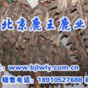 陕西梅花鹿2011年陕西养鹿技术图片