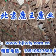 山西省左玉县梅花鹿图片