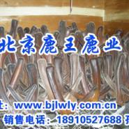 山西夏县梅花鹿养殖商场图片